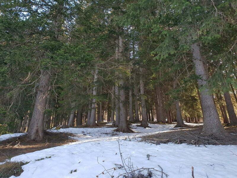 foresta-va-di-vizze
