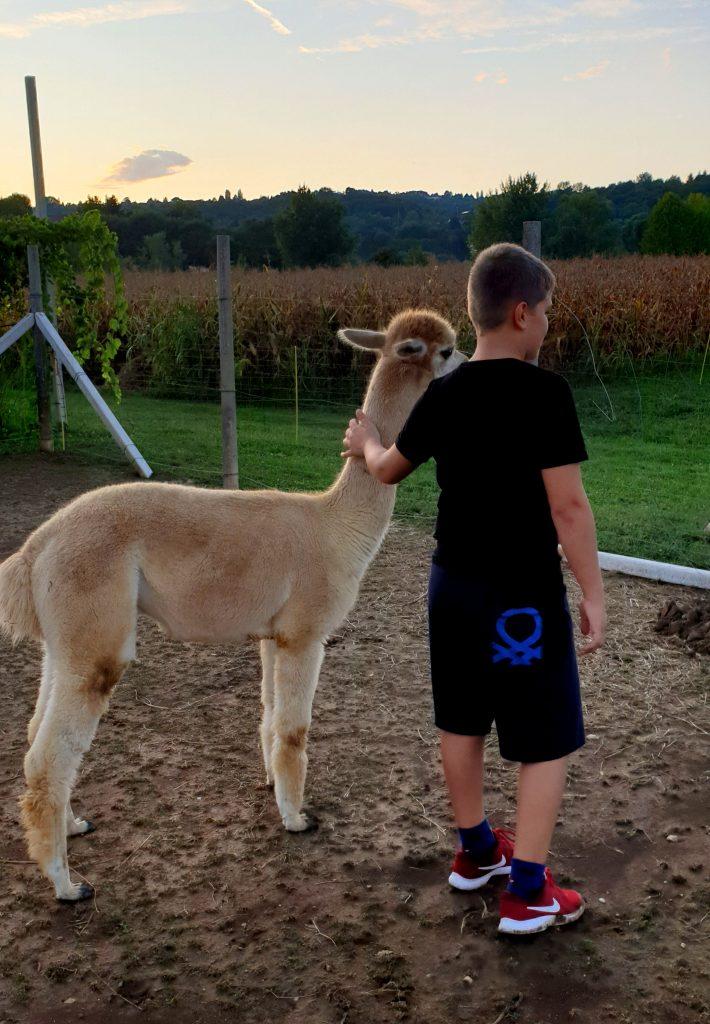alpaca-a-vicenza