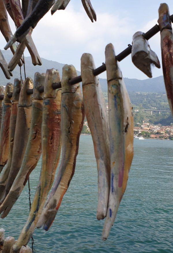 sardine-di-lago