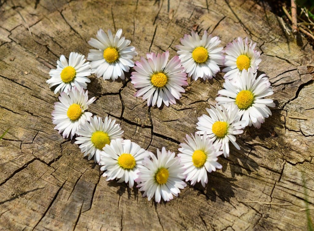 pensieri in quarantena- margherite in fiore